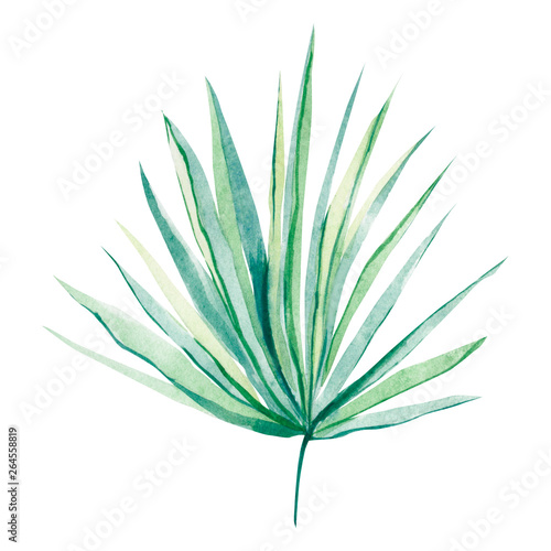 Canvas Prints Palm tree watercolor tropical leaves for wedding invintation, greeting cards and more design