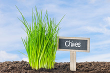Chives In The Garden With A Wooden Label