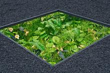 Modern Sunken Conceptual Garden With Mixed Planting