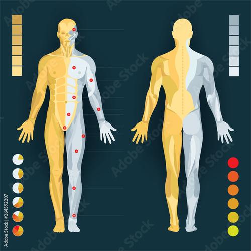 Human anatomy diagram Fototapete