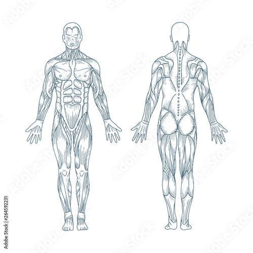 Human anatomy Poster Mural XXL
