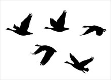 Vector Silhouettes Of  Flock O...
