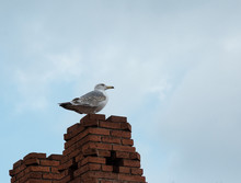 Loneliness Proud Seagull Stands On The Brick Roof On The Background Of The Sky