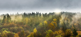 Fototapeta  - Deciduous and coniferous forest on the slope of the mountain. Sun rays shining through the trees.