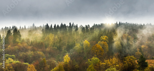 Taupe Deciduous and coniferous forest on the slope of the mountain. Sun rays shining through the trees.
