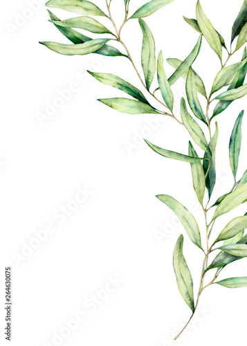 Fotografija Watercolor olive branch card with leaves