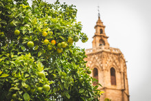 Spain, Valencia, View To El Micalet With Orange Tree In The Foreground