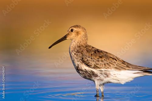 Cute water birds фототапет