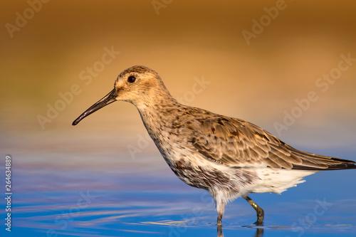 Fotomural Cute water birds