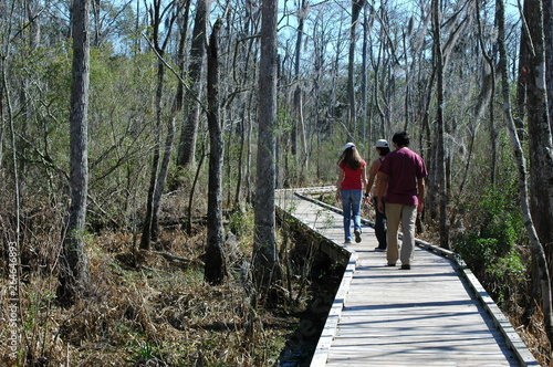 Photo The view at Fairview-Riverside State Park, in Madisonville, Louisiana, USA