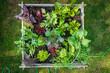 Leinwanddruck Bild - Urban Gardening with raised beds