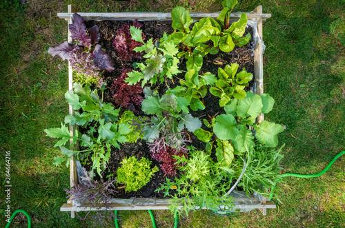 obraz lub plakat Urban Gardening with raised beds