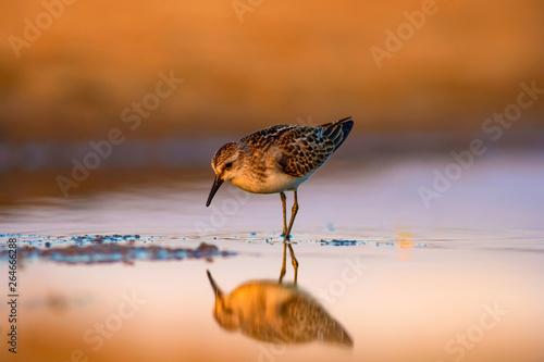 Cute little water bird Canvas-taulu