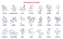 Best Herbal Remedies For Laryngitis