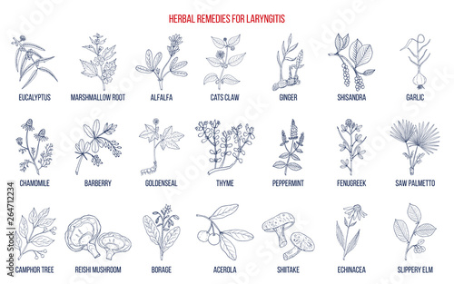 Best herbal remedies for laryngitis Canvas Print