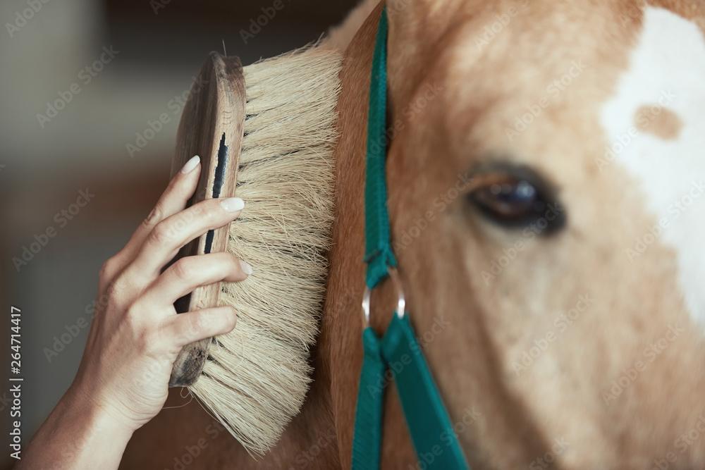 Fototapeta Woman grooming horse in stable