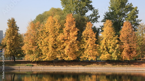 Fotografie, Obraz  city park in gold fall