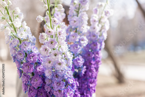 Bunch of fresh delphinium Fototapet