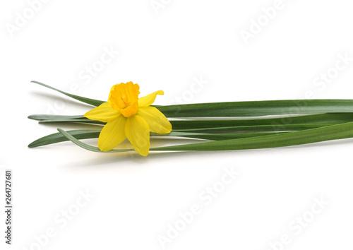 Poster de jardin Narcisse Flowers yellow narcissus.