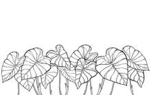 Bunch Of Outline Tropical Leaf...