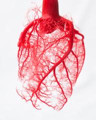 Panel Szklany Do gabinetu lekarskiego/szpitala Blood vessel system of an heart