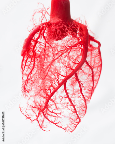Tablou Canvas Blood vessel system of an heart
