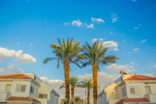 Tropic Symmetry City View Reach Villa District Photography With Two Palm Trees And House Apartments, Blue Sky Background