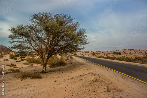 Cadres-photo bureau Amérique du Sud desert rural country side outdoor photography lonely tree and empty asphalt road in sand valley environment in USA near board with Mexico