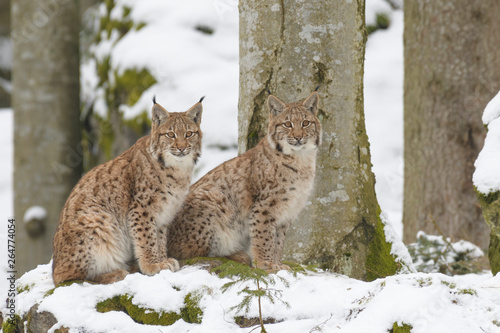 Recess Fitting Lynx European Lynx