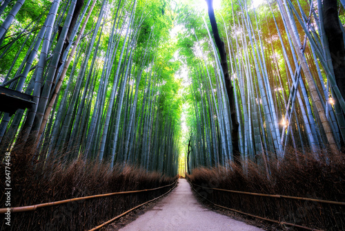 Photo sur Toile Marron chocolat Arashiyama Bamboo Forest famous place in Kyoto Japan. - The Arashiyama Bamboo Grove is one of Kyoto's top sightseeing for tourist travel to Kyoto and Kansai, Japan.