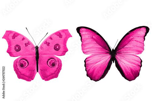 Fotografie, Obraz  Deep pink butterflies