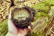 Bird's Nest In The Hands , Abandoned Nest On Green Moss