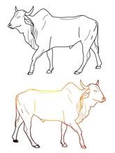 Zebu Cow Contour, Freehand Dra...