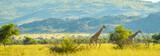 Fototapeta Sawanna - Authentic true South African safari experience in bushveld in a game reserve
