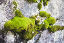 Green Moss On Mountain Rock Na...