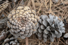 Fibonacci Lässt Grüssen: Naturfraktal