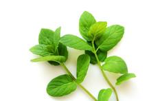Mint Leaves Fresh On White Background