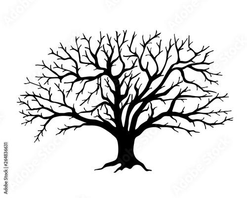 Fotografia, Obraz Black silhouette apple tree  without leaves