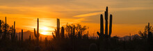 A Panoramic View Of Saguaro An...