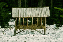 Wildlife Feeder - Animal Feed In The Woods