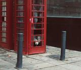 Fototapeta Londyn - pies w budce telefonicznej w anglii