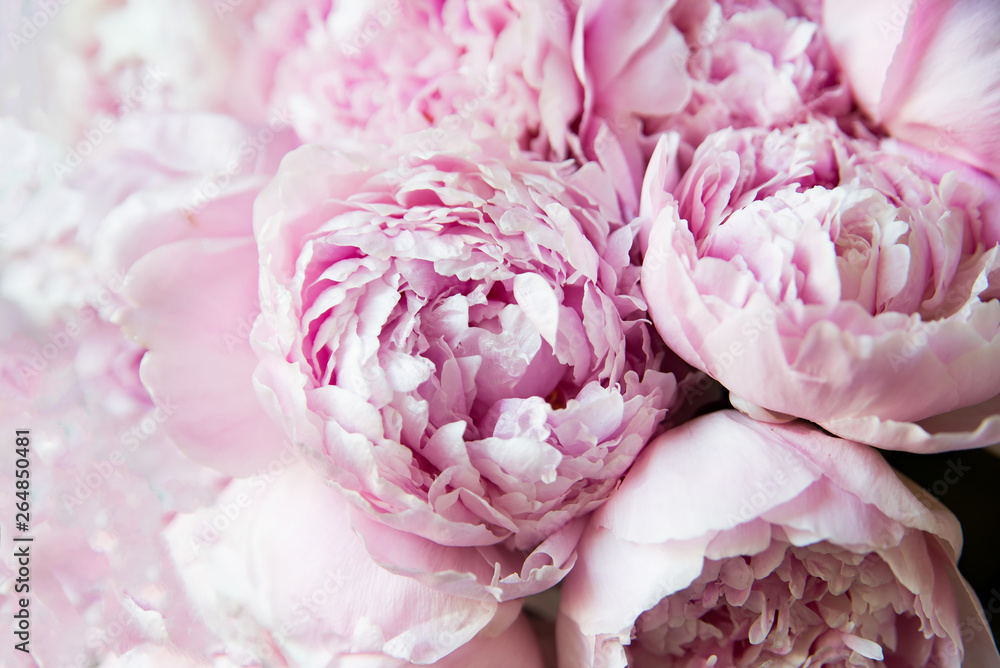 Białe i różowe piwonie. Tło, tapeta ..
