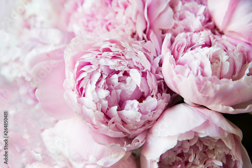 White and pink peonies. Background, wallpaper.. Fototapete
