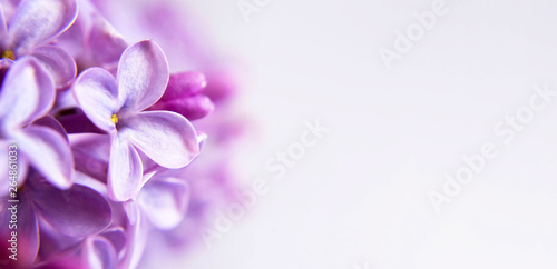Vászonkép  Floral background or banner with lilac flowers and copy space