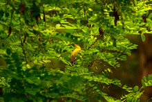Cute Little Bird In Nature. Nature Background.