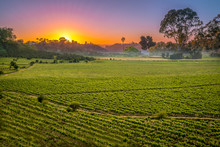 Sunset Over Vinery In Chile For Agriculture Or Vinevard Background