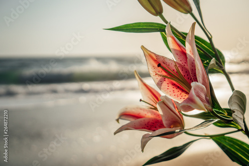 Fotografia Lily flower on beach at sunset close up2