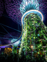Gardens By The Bay, Singapore - Nov 26, 2018: Night View Of Supertree Grove At Gardens By The Bay In Singapore. Spanning 250 Acres Of Reclaimed Land In Central Singapore Near Marina Bay