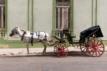 White Horse And Carriage Spanish Colonial Style Havana Cuba