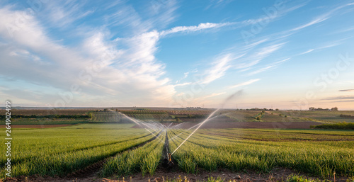 Canvas Print onion field with irrigation in morning light